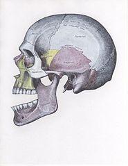 Передний вывих нижней челюсти