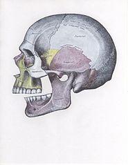 Задний вывих нижней челюсти